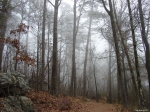 Hot Springs National Park - Short Cut Trail - Foggy Wonderland