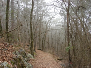 Hot Springs National Park - Hot Springs Mountail Trail - Foggy Path