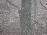 Hot Springs National Park - HS Mountail Trail - Squirrel Fog