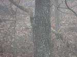 Hot Springs National Park - HS Mountail Trail - Squirrel Fog