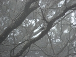 Hot Springs National Park - Short Cut Trail - Bird in Fog