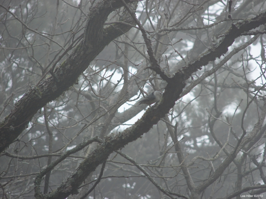 Hot Springs National Park - Short Cut Trail - Bird in Fog