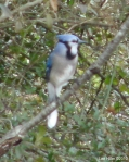 Hot Springs National Park Hot Springs Mt Trail Blue Jay