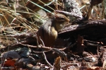 Hot Springs National Park Goat Rock Trail Chipmunk