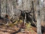 Hot Springs National Park Upper Dogwood Spider Roots