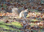 Hot Springs National Park Promenade Squirrel Breakfast Run