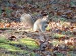 Hot Springs National Park Promenade Squirrel Breakfast Run