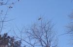 Hot Springs National Park Lower Dogwood Fly Over