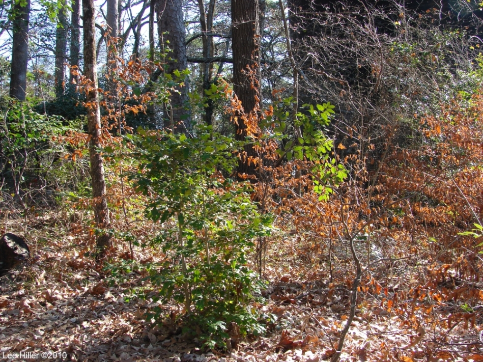 Hot Springs National Park - Dead Chief Trail Small Forest