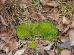 Hot Springs National Park - Mountain Trail Moss Caterpillar