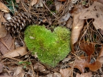Hot Springs National Park - Mountain Trail Moss Heart