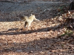 Hot Springs National Park - Short Cut Trail Leaping Squirrel