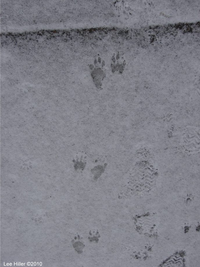 Hot Springs National Park Ice Snow Entrance Paw Prints