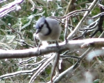 Hot Springs National Park Trails Mountain Trail Blue Jay