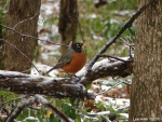 Hot Springs National Park Trails Peak Trail Robin
