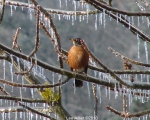 Hot Springs National Park Trails Tufa Terrace Robin