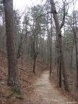 Honeysuckle Trail