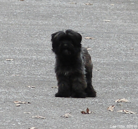 Hot Springs Mountain Road - Lost Puppy