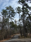 Hot Springs Mountain Trail - Tower