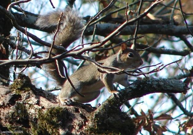 Squirrel Peak Trail