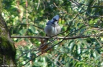 Hot Springs National Park Trails Carriage Road Blue Jay