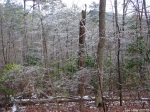 Hot Springs National Park Trails Dead Chief Trail