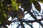 Hot Springs National Park Trails Promenade Mocking Bird