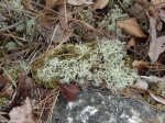 Hot Springs National Park Trails Mountain Trail Lichen