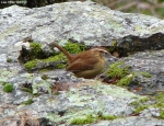 Hot Springs National Park Trails Peak Trail Carolina Wren