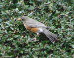 Hot Springs National Park Trails Pramenade Robin
