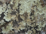 Hot Springs National Park Gulpha Gorge Lichen Rock