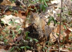 Hot Springs National Park Short Cut Trail Chipmunk