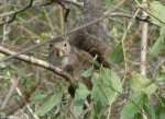 Hot Springs National Park Trails Short Cut Trail Squirrel