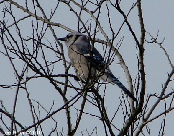 Hot Springs National Park Trails Tufa Terrace Blue Jay