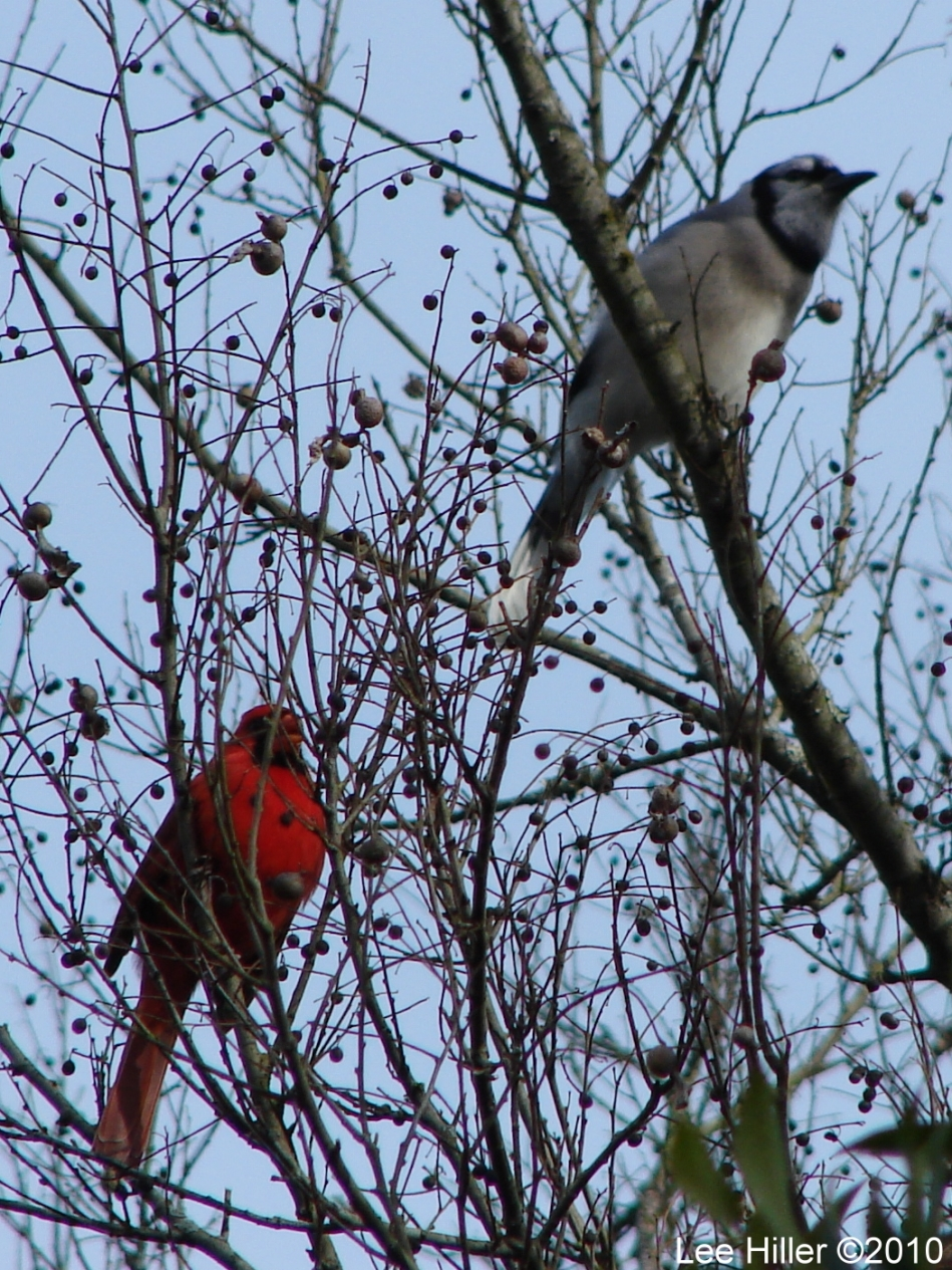 Hot Springs National Park Trails Tufa Terrace Blue Jay Cardinal