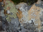 Hot Springs National Park Trails HSMT Rock Lichen Moss