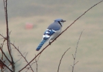 Hot Springs National Park Trails Pagoda Blue Jay
