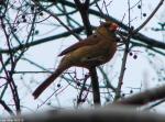 Hot Springs National Park Trails Promenade Cardinal Female