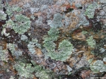 Hot Springs National Park Trails Short Cut Lichen Rock