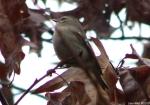 Hot Springs National Park Trails Tufa Terrace Tiny Mystery Bird