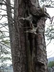 Hot Springs National Park Trails Gulpha Gorge Survivor Tree