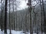 Hot Springs National Park Trails Snow Honeysuckle Trail