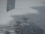 Hot Springs National Park Trails Snow Mt. Top Junco Sparrow
