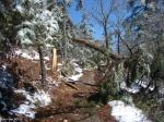 Hot Springs National Park Trails Goat RockTrail Broken Tree