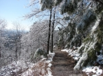 Hot Springs National Park Trails Goat Rock Trail