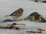 Hot Springs National Park Trails Gulpha Gorge Slate Junco