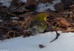 Hot Springs National Park Trails HSMT Green Warbler