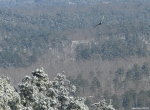 Hot Springs National Park North Mountain Overlook Eagle