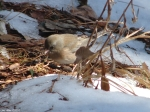 Hot Springs National Park Trails Peak Trail Female Slate Junco