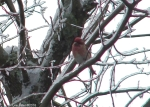 Hot Springs National Park Trails Short Cut Purple Finch